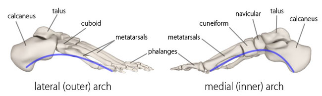 Yoga Anatomy: The Longtitudinal Arches of the Feet | YogaUOnline