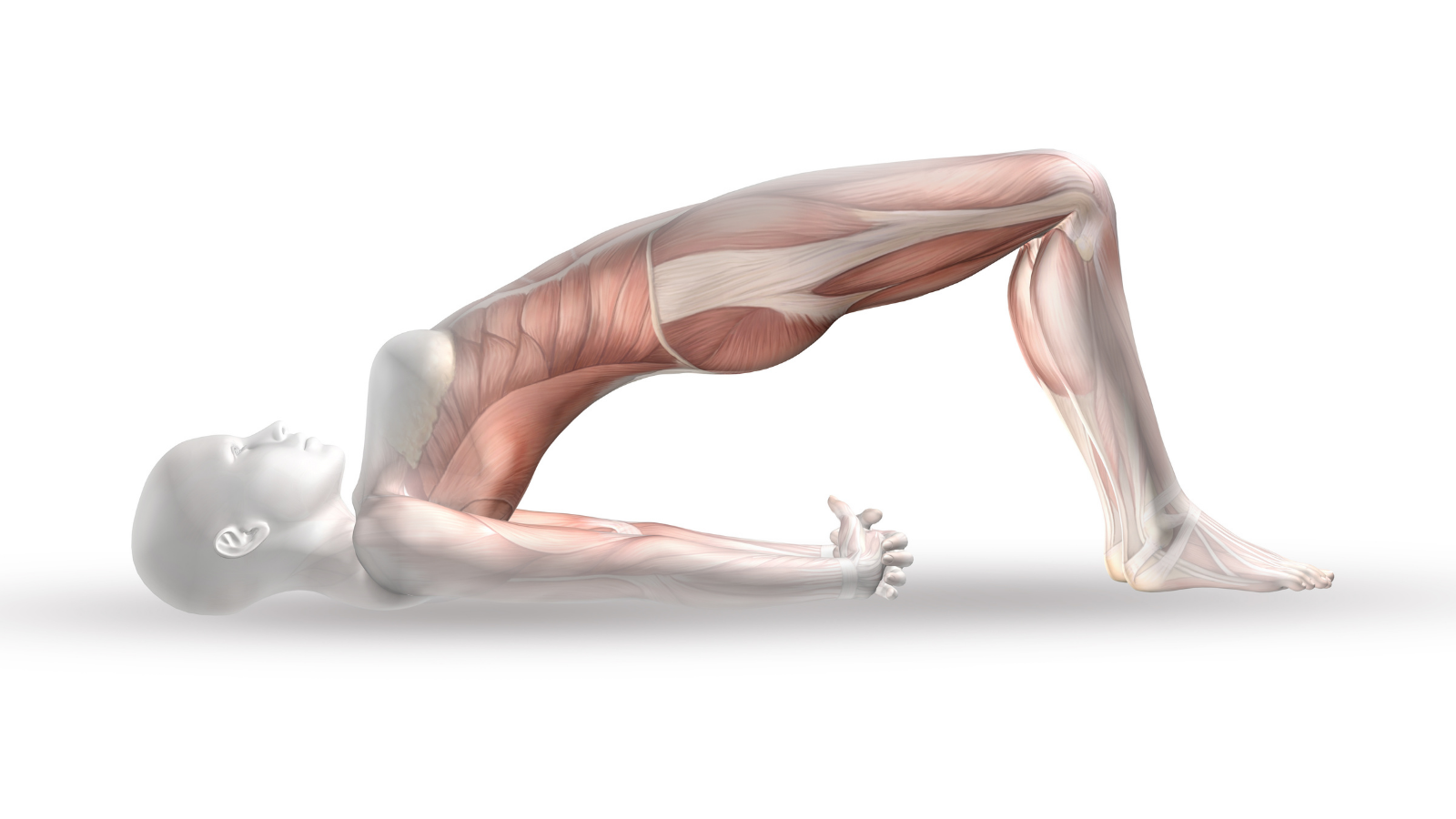 How to make learning yoga anatomy easy in ten key steps