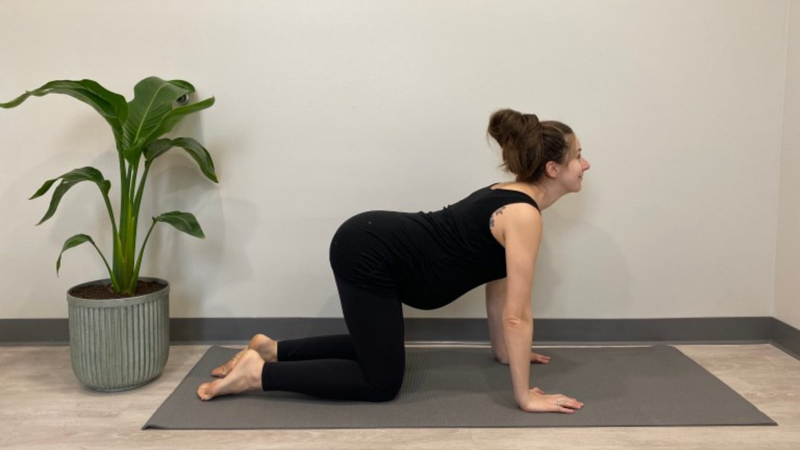 Pregnant yoga student practicing Cow Pose (Bitilasana) for improved mobility around the spine and pelvis