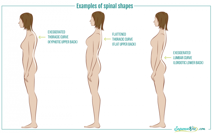 Axial Extension How To Lengthen Your Spine Without Strain Yogauonline