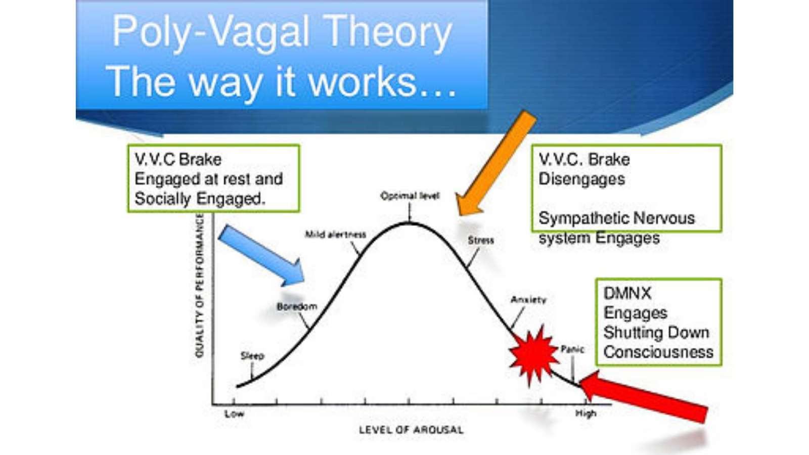 """Illustration of the Poly-Vagal Theory and the """"brakes"""" for the sympathetic nervous system"""