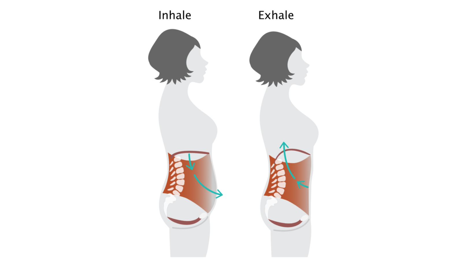 Yoga student demonstrating what's happening in the diaphragm on an inhale and exhale