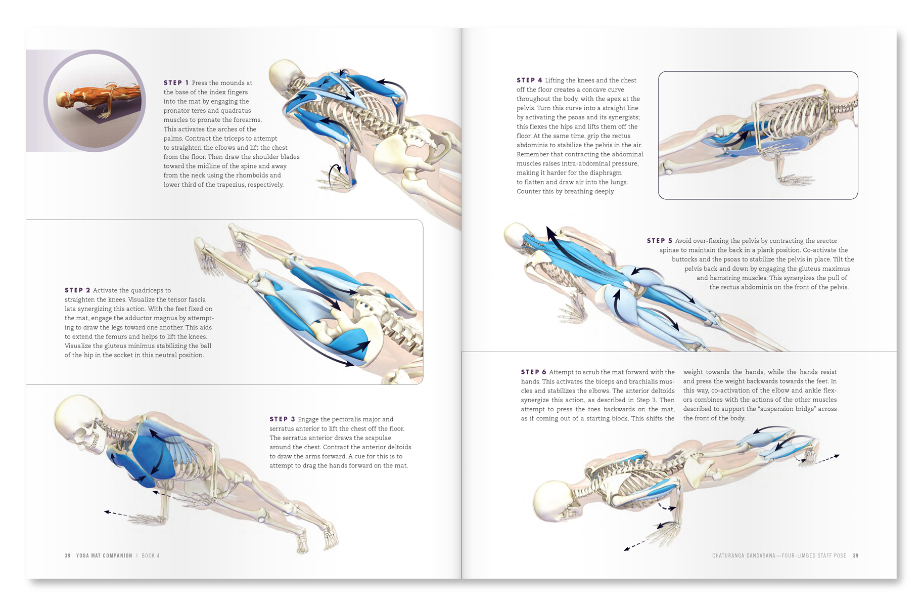 """An excerpt from """"Yoga Mat Companion 4: Anatomy for Arm Balances and Inversions"""""""