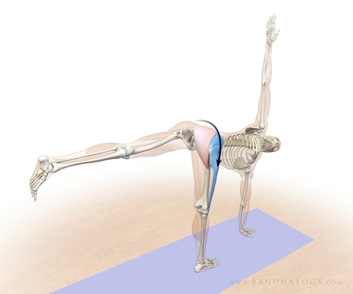 Revolved half moon pose 3 steps to lift and stabilize the pelvis yogauonline