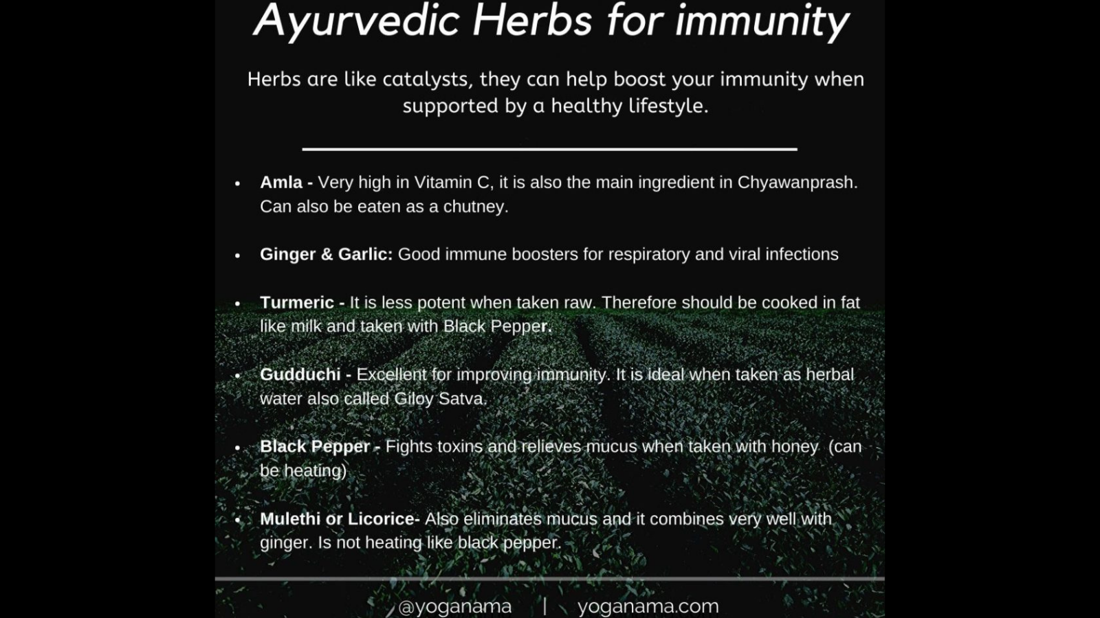 Beginners tips for Ayurvedic herbs to build stronger immunity