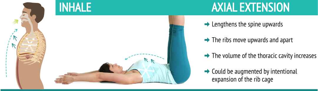 Axial extension poses and the breath work featuring the inhale, spine lengthening, inhale