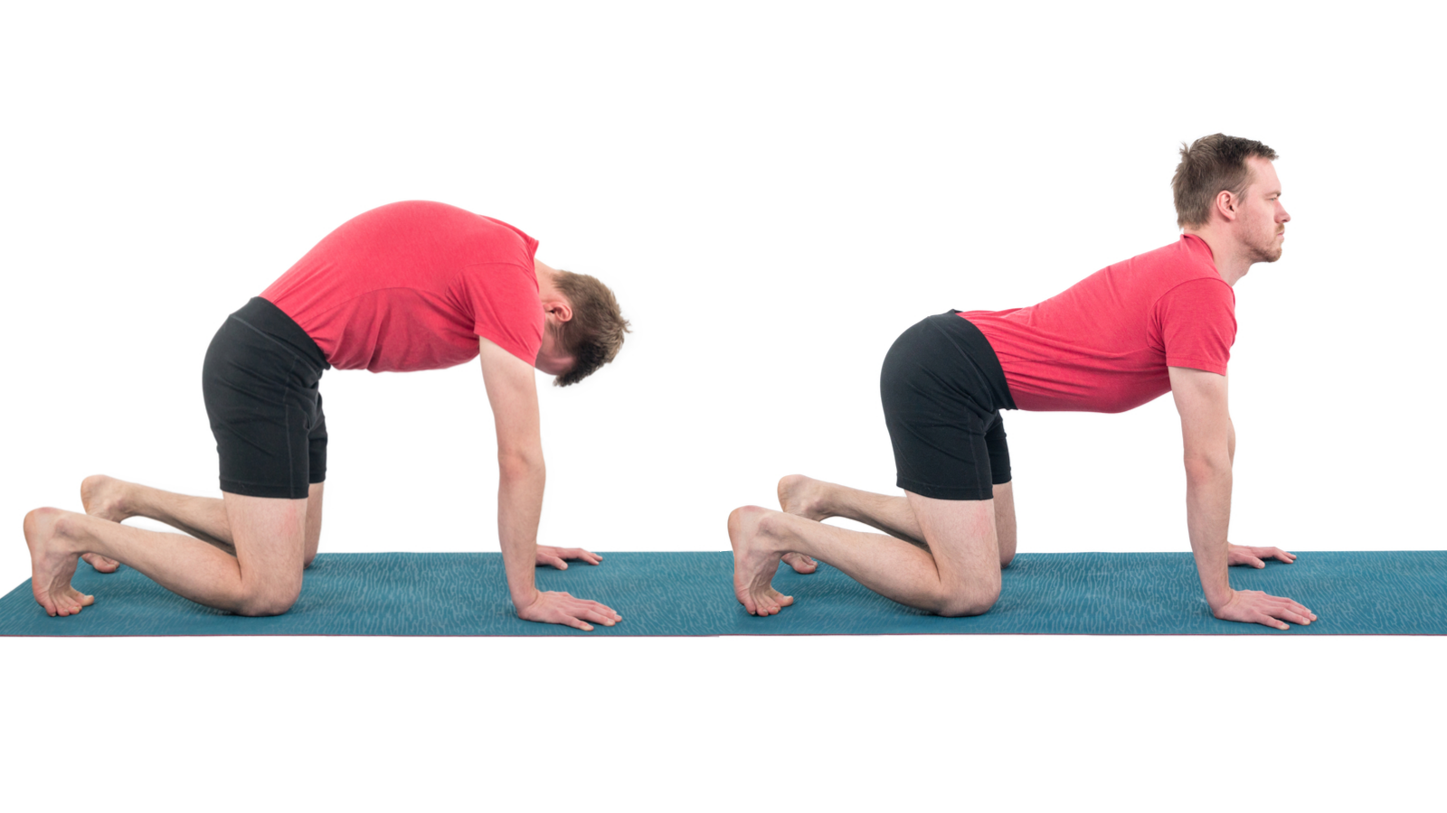 Marjarasana, Cat-cow pose, fluidity in spine, beginner's yoga, yoga for spine health, yoga for stress relief