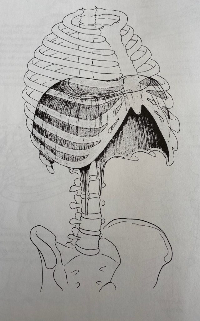 Anatomical diagram of the diaphragm from the Anatomy of Movement by Blandine Calais-Germain