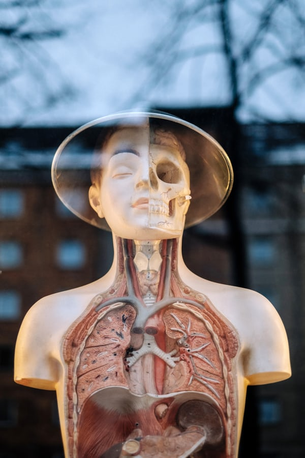 Experiential Anatomy, living from wholeness, rightful nature, learn it, feel it, integrate it