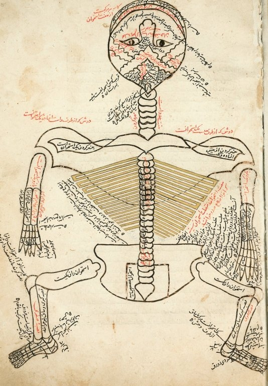 Experiential Anatomy, living from wholeness, rightful nature
