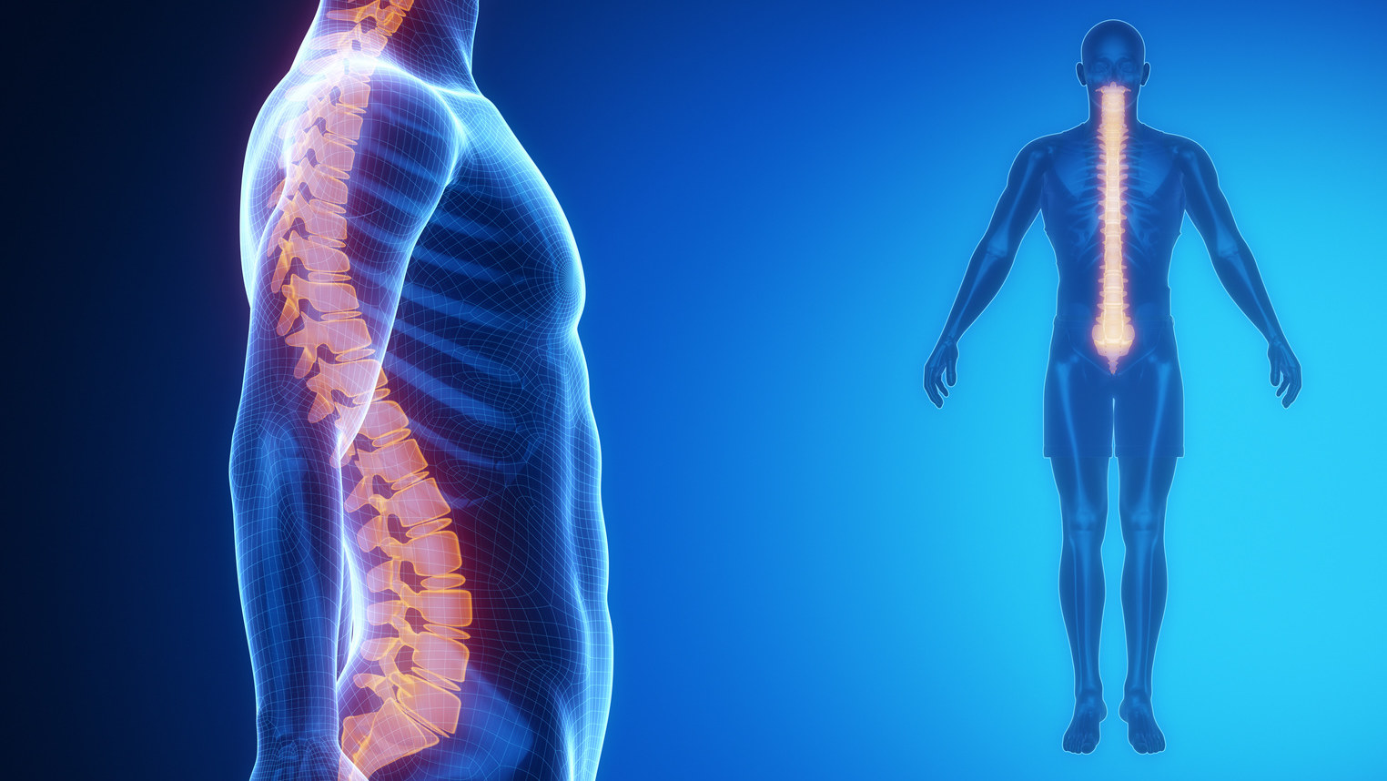 the spine, posture, yoga and posture, back care, yoga for pain relief, the importance of posture on health