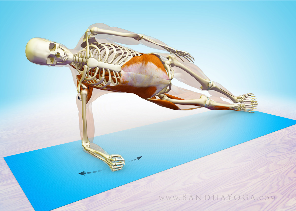 Yoga Anatomy: Two Steps to a Healthier Side Forearm Plank ...