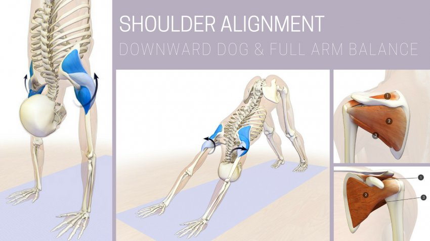 Shoulder Alignment In Downward Facing Dog Pose And Full Arm Balance