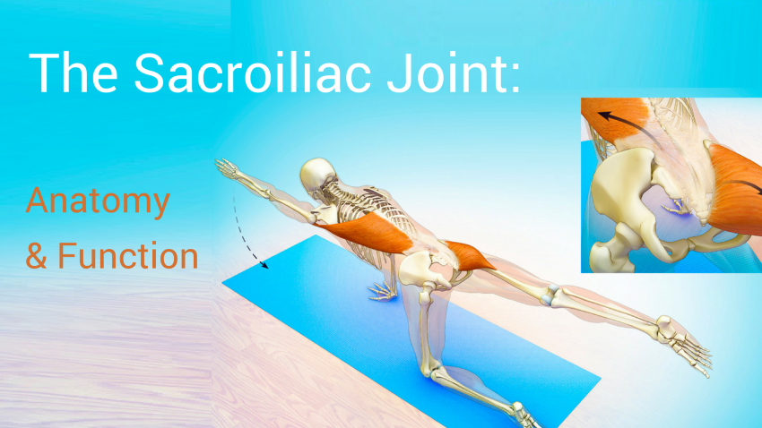 The Sacroiliac Joint Anatomy And Function Yogauonline