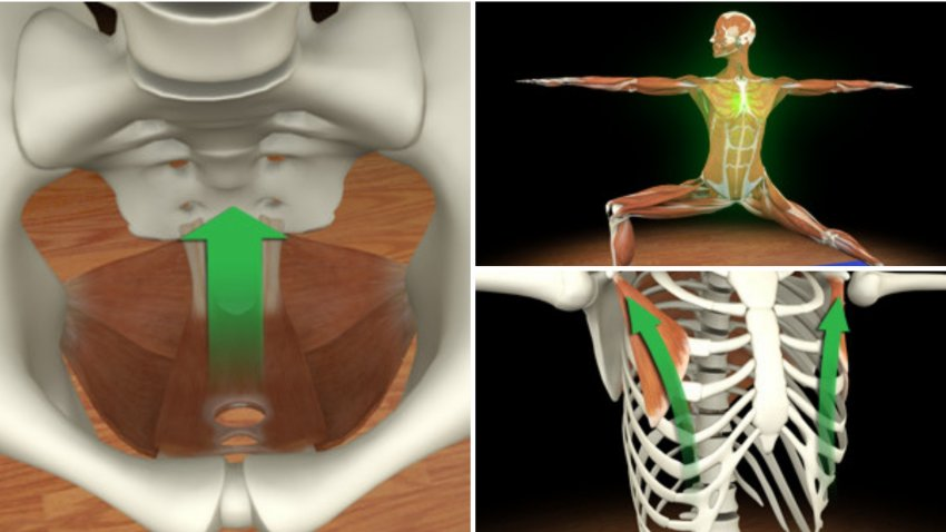Renderings of muscles and bones of the human body