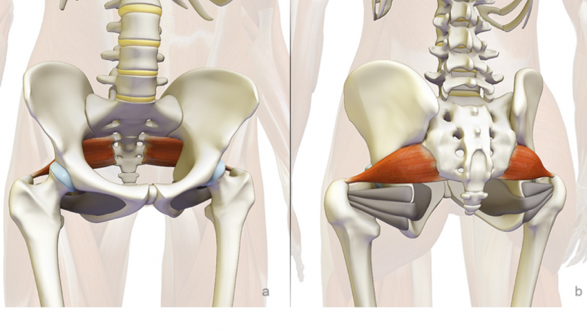 Stabilizing The Sacroiliac Joint The Piriformis Muscle In Yoga