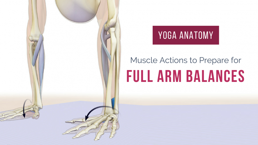 Yoga Anatomy: Best Muscle Actions to Prepare for Full Arm Balance ...
