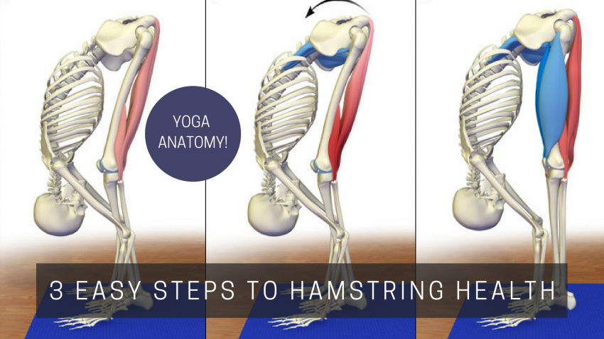 Yoga Anatomy 3 Easy Steps To Hamstring Health Yogauonline