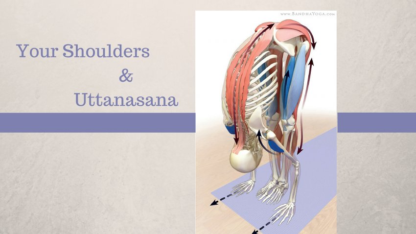 How to Use Your Shoulders to Move into Uttanasana | YogaUOnline