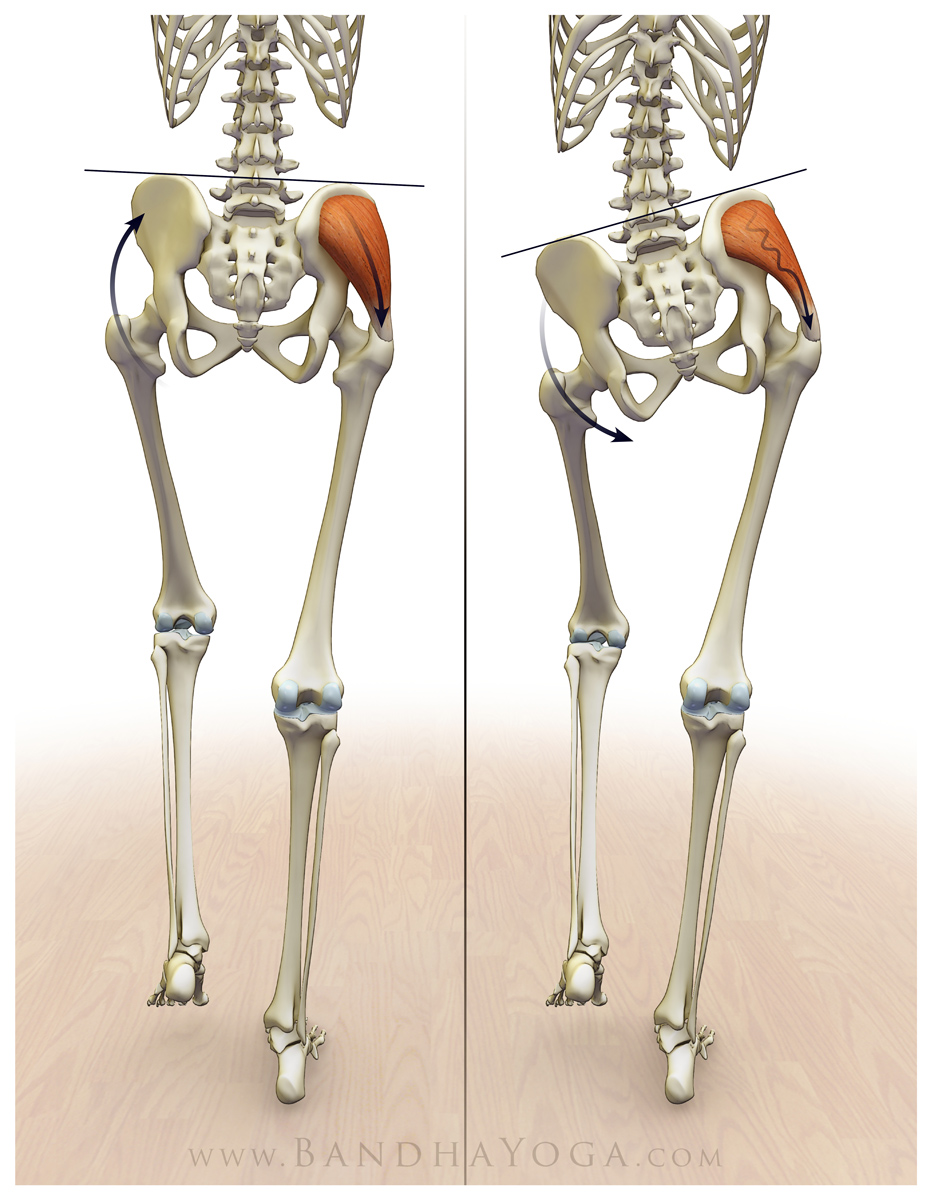 Revolved Half Moon Pose: 3 Steps to Lift and Stabilize the Pelvis ...