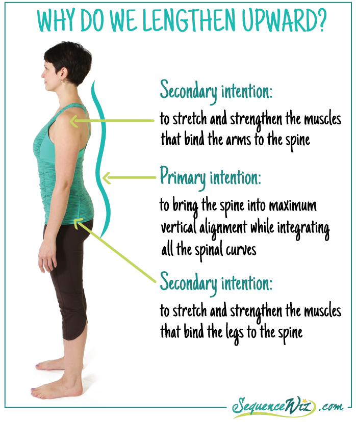 4 Types Of Yoga Poses That Increase Axial Extension Yogauonline